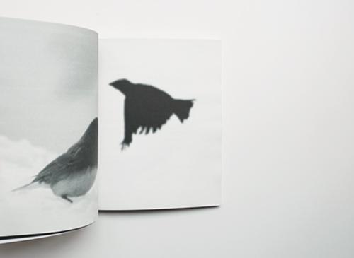 Terri Weifenbach: Centers of Gravity
