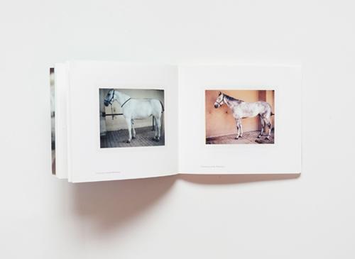 Charlotte Dumas: Companion