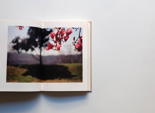 Terri Weifenbach:STILLL