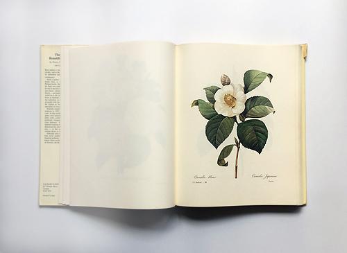 Pierre Joseph Redoute: The Most Beautifuk Flowers