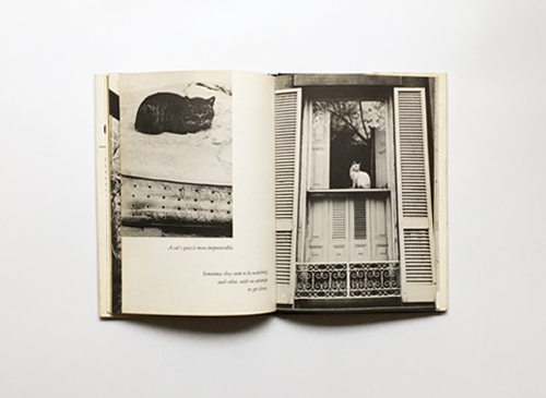 Stefan Congrat-Butlar: The Open Look