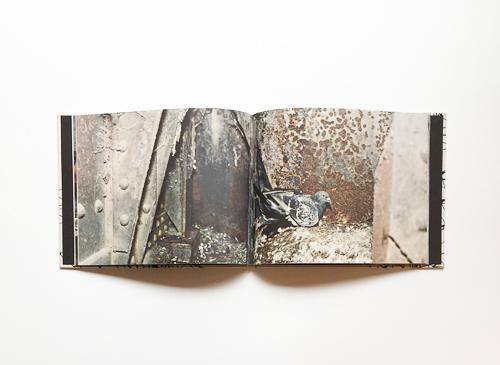 Stephen Gill: Pigeons