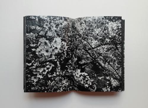 Daido Moriyama: Ango [signed]