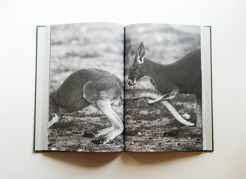 Act of Love - A Visual Dictionary of Animal Courtship
