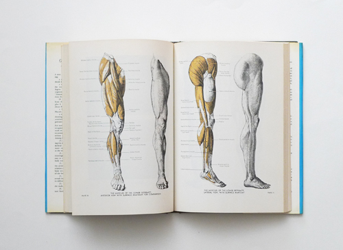 AN ATLAS OF ANATOMY FOR ARTISTS FRITZ SCHIDER EPUB