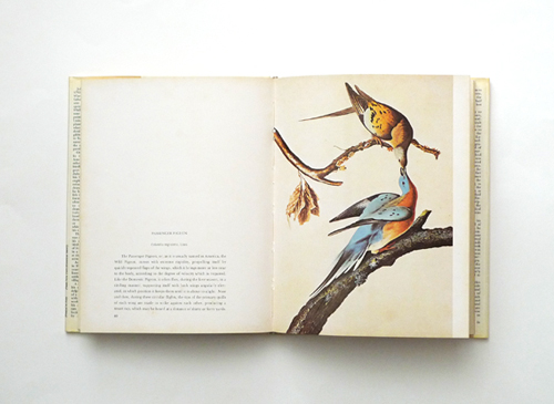 audubon the birds of america 2