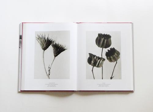 Karl Blossfeldt: The Complete Published Work