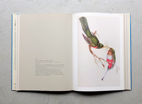 The Book of Birds - Five centuries of bird illustration