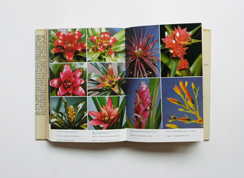 BROMELIADS - For Home, Garden and Greenhouse