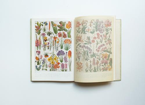 原色花卉類図譜