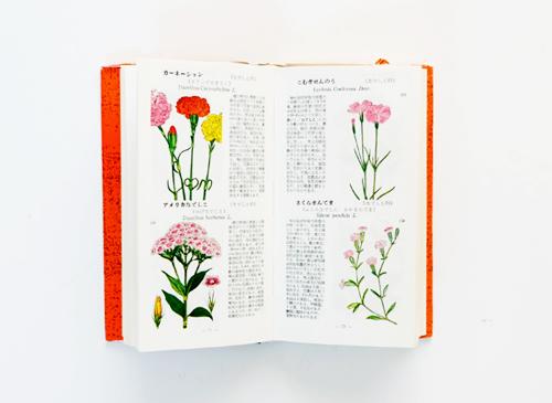 学生版原色植物図鑑 園芸植物篇