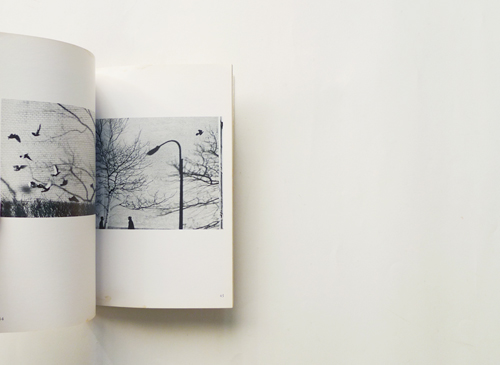 Andre Kertesz: BIRDS