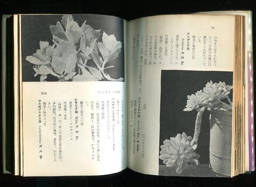 多肉植物・ハンドブック
