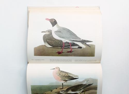 John James Audubon: The Birds of America