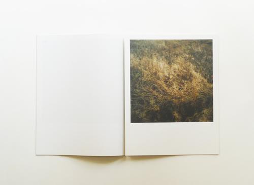 Anne Schwalbe: Wiese