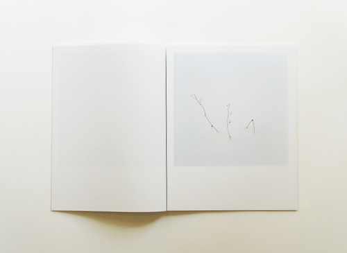 Anne Schwalbe: Wiese XXI - XLVIII